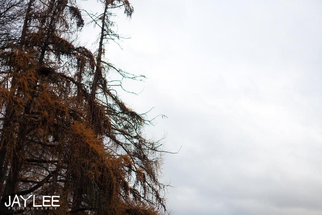 tree photography, tree and sky, greenlake photography