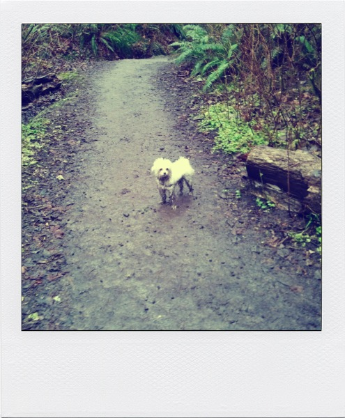 maltese dog, walks, walking the dog, family walks