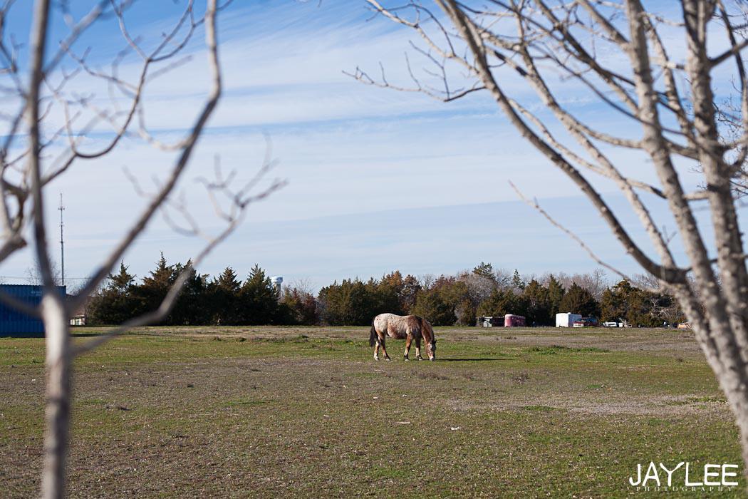 horse photography, beautiful horse photography, creative photography framing, creative landscape photography