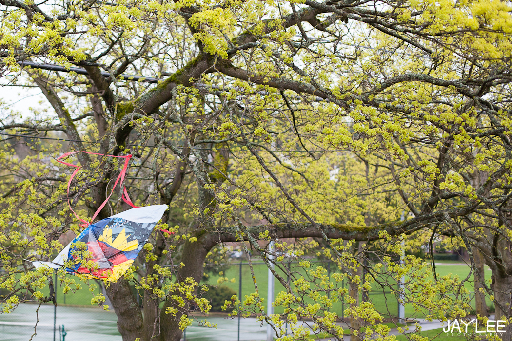 kite stuck in a tree, kite spring, wedding photographer blog, seattle wedding photographer blogs