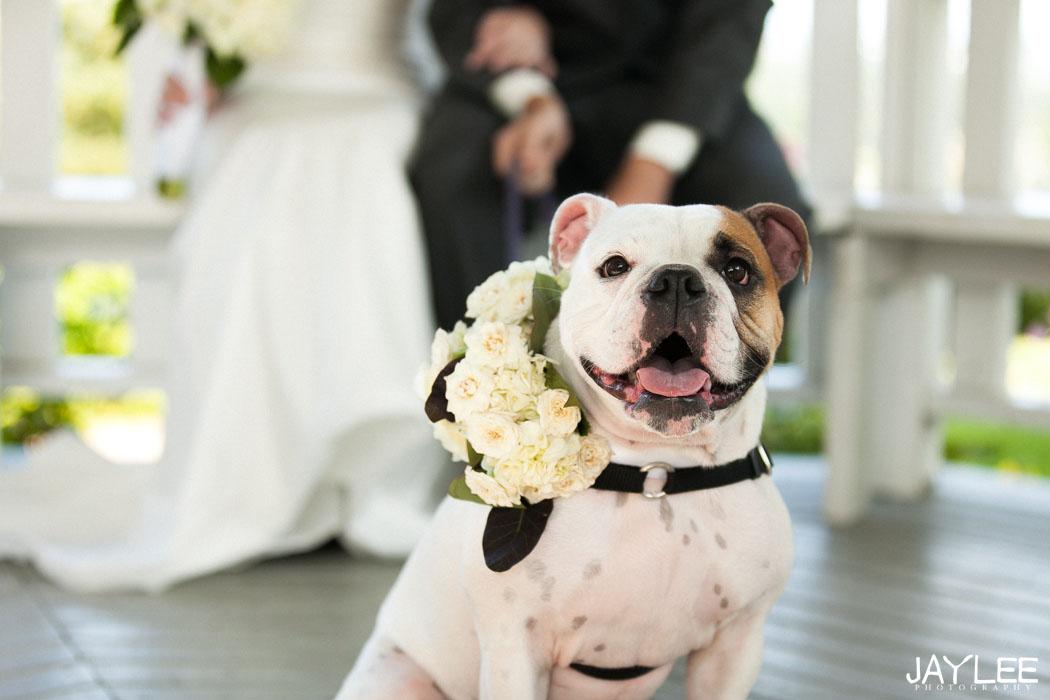 dog wedding photos, wedding photography seattle, seattle wedding photographer