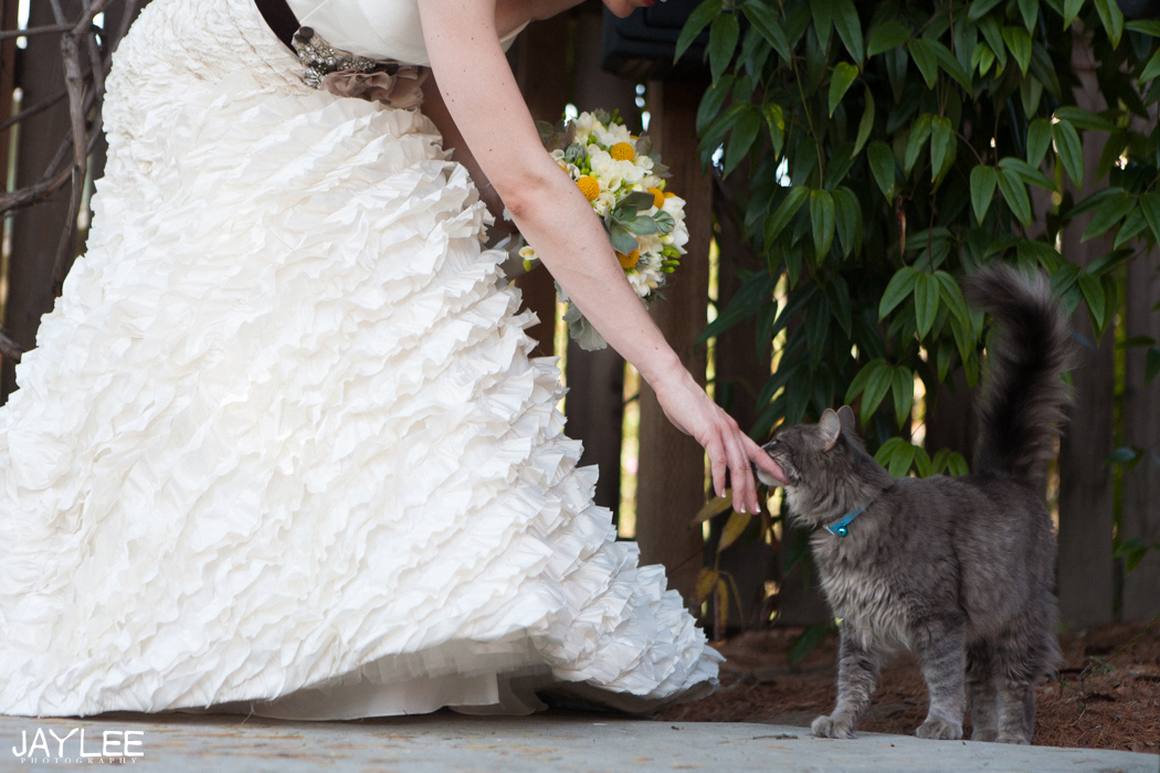 bride in classy gown petting cat