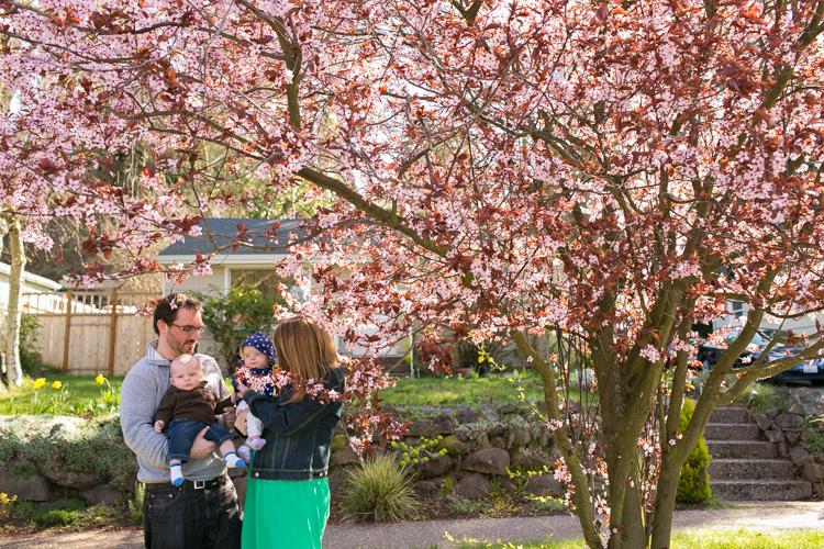 cherry blossom tree family photos