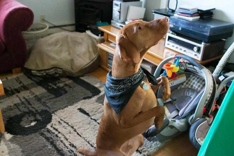 dog photography seattle