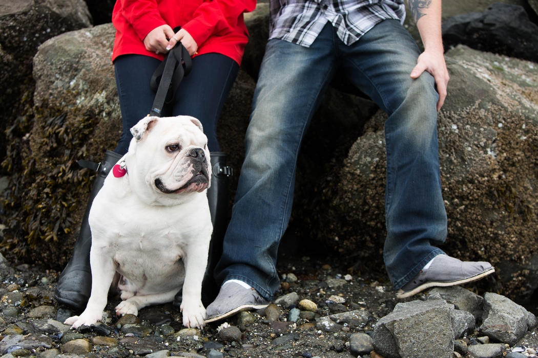 bulldog photography seattle