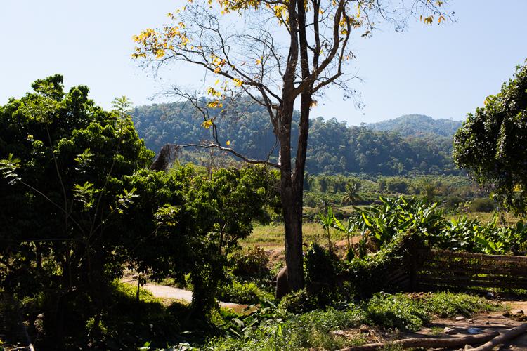 northern thailand landscape
